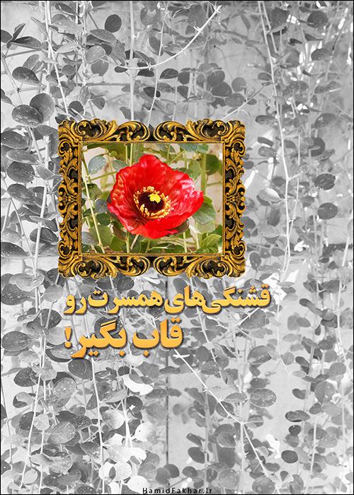 hamidfakhar-39